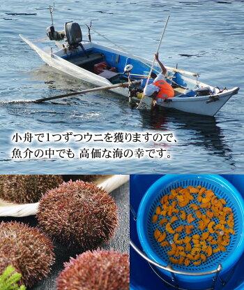 訳あり塩水生雲丹100g前後無添加の塩水エゾバフンウニ。色目、形崩れのわけあり品ですが、生うにの甘さ・とろける舌触りが味わえます。獲れたての雲丹をそのまま塩水パック。北海道グルメ食品魚介類・シーフードウニバフンウニ塩水