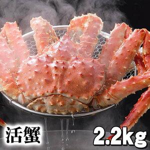活タラバガニ 活本タラバガニ オス 2.2kg前後 茹でたてなら到着後、すぐ食べられる未冷凍の本タラバガニです。活カニならではのお刺身用でも食べられます。焼きガニ、蒸し蟹も美味し