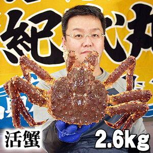 北海道産 活たらばがに オス 2.6kg前後 茹でたてなら到着後、すぐ食べられる未冷凍のたらば蟹です。活カニならではのお刺身用でも食べられます。焼きガニ、蒸し蟹もできる活タラバ