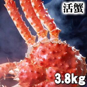 特大かに 活たらばがに オス 3.8kg前後 茹でたてなら到着後、すぐ食べられる未冷凍のたらば蟹です。活カニならではのお刺身用でも食べられます。焼きガニ、蒸し蟹もできる活タラバ