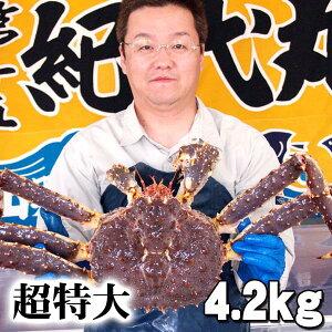 北海道産 超特大タラバ 活たらばがに  4.2kg前後 茹でたてなら到着後、すぐ食べられる未冷凍のたらば蟹です。活カニならではのお刺身用でも食べられます。焼きガニ、蒸し蟹もできる