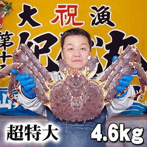 北海道産 超特大かに 活たらばがに オス 4.6kg前後 茹でたてなら到着後、すぐ食べられる未冷凍のたらば蟹です。活カニならではのお刺身用でも食べられます。焼きガニ、蒸し蟹もでき