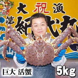 北海道産 巨大かに 活タラバ蟹 オス 5.0kg前後 茹でたてなら到着後、すぐ食べられる未冷凍のたらば蟹です。活カニならではのお刺身用でも食べられます。焼きガニ、蒸し蟹もできる活