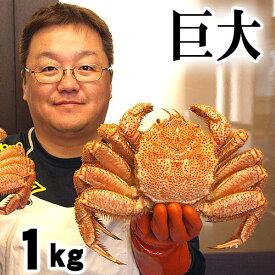 超特大な毛蟹 1kg ボイル冷凍 北海道産の毛ガニです。毛がにの醍醐味でもあるカニ味噌とかに身と絡めてお召し上がりください。かに通販 蟹みそ北海道グルメ食品 魚介類・シーフード カニ 毛ガニ (ギフト食品)