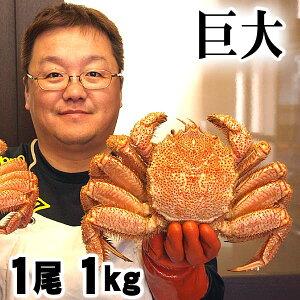 超特大な毛蟹 1kg 1尾入り ボイル冷凍 北海道産の毛ガニです。毛がにの醍醐味でもあるカニ味噌とかに身と絡めてお召し上がりください。かに通販 蟹みそ北海道グルメ食品 魚介類・シー