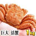 (巨大サイズ) 北海道産 活毛蟹 1kg前後 毛ガニの美味しさを味わうなら、未冷凍の活け活カニ 毛がにの醍醐味でもあるカニ味噌。活毛ガニならかにのお刺身、焼きガニが食べられます。カニ通販、北海道グルメ