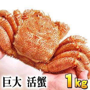 (巨大サイズ) 北海道産 活毛蟹 1kg前後 毛ガニの美味しさを味わうなら、未冷凍の活け活カニ 毛がにの醍醐味でもあるカニ味噌。活毛ガニならかにのお刺身、焼きガニが食べられます。
