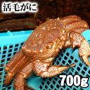 北海道産 活毛蟹 700g前後 特大 毛ガニの美味しさを味わうなら、未冷凍の活け活蟹。茹でたて毛がにの醍醐味でもあるカニ味噌。活毛ガニならかにのお刺身、焼きガニが食べられます。カニ通販、 魚介類・ カ