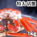 活本ズワイカニ 1.0kg(特大)茹でたてなら到着後、すぐ食べられる未冷凍のズワイ蟹です。活カニならではのお刺身用でも食べられます。焼きガニ、蒸し蟹もできる活ズワイガニ/活け松葉蟹 北海道グルメ食品