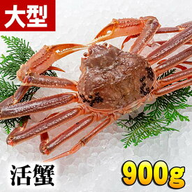 活本ずわいがに 900g前後(大サイズ)茹でたてなら到着後、すぐ食べられる未冷凍のズワイ蟹です。活カニならではのお刺身用でも食べられます。焼きガニ、蒸し蟹もできる活本ズワイガニ/活け松葉蟹 北海道グルメ食品 魚介類・シーフード カニ ズワイガニ 活