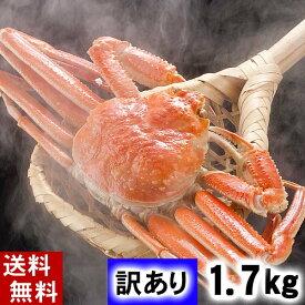 (送料無料)訳あり 活ずわいがに 2〜3尾入りで合計1.7kg 活ズワイガニわけあり価格。茹でたてなら到着後、すぐ食べられる未冷凍のずわい蟹です。活カニならではのお刺身用でも食べられます。活け松葉蟹 北海道グルメ食品 魚介類・シーフード カニ ズワイガニ 活