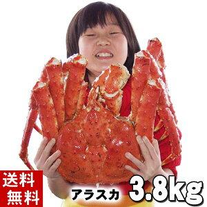 (送料無料) タラバガニ たらばがに 姿 3.8kg前後 特大 ボイル冷凍(アラスカ・北海道産) たらば蟹贈答用のカニ姿です。かに飯や、焼きガニも美味しい。身の入りいいかに足。カニ通販