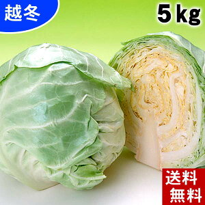 (送料無料) 越冬キャベツ 合計5kg(2〜4玉入り) 北海道産の真冬に食べる雪の下キャベツ。イチゴより甘い雪下キャベツ、糖度10度の葉物野菜。千切り、ロールキャベツ、サラダ、スープにご利
