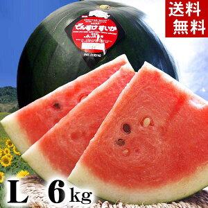 (送料無料)でんすけすいか 秀品 Lサイズ 6〜7kg 黒い皮の中には赤の果肉、伝助・田助西瓜。ギフトに喜ばれる北海道のデンスケスイカ/でんすけスイカ、旬のフルーツ通販 グルメ食品 フルー