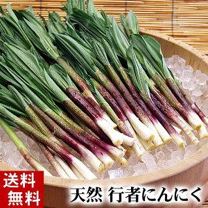 (送料無料)天然 行者にんにく 500g前後 美味しい旬の北海道産春野菜、行者ニンニクを産地直送。ギョウジャニンニクはアイヌネギ、ヒトビロ、キトビロとも呼ばれます。餃子の具や醤油漬