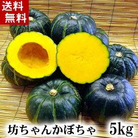 (送料無料)北海道産小玉カボチャ 坊ちゃんかぼちゃ 5kg前後(8〜12玉入り)粉質でホクホクな南瓜。てんぷらやかぼちゃスープ、かぼちゃの煮物など、様々料理にご利用できる緑黄色野菜です。北海道グルメ食品 野菜・きのこ かぼちゃ