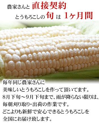 【訳あり】(送料無料)北海道産白いとうもろこし旭山動物園白くまコーン11〜13本入り(北海道スイートコーン)フルーツのような白いトウモロコシ、生でも食べられます。ピュアホワイト・ホワイトレディー。産地直送のホワイトコーン