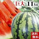 (送料無料)富良野・浦臼産マドンナスイカ 秀品 6Lサイズ 11kg以上 でんすけすいかよりも糖度が高い糖度12度の西瓜。シャリ感も良く値段も安い。旬のフルーツ...