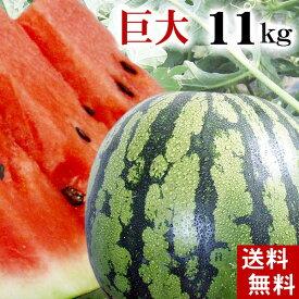 )(送料無料)富良野・浦臼産マドンナスイカ 秀品 6Lサイズ 11kg以上 でんすけすいかよりも糖度が高い糖度12度の西瓜。シャリ感も良く値段も安い。旬のフルーツグルメ食品 フルーツ・果物 スイカ 大玉スイカ(くだものギフト お中元)