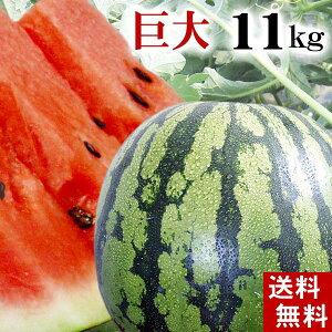 )(送料無料)富良野・浦臼産マドンナスイカ 秀品 6Lサイズ 11kg以上 でんすけすいかよりも糖度が高い糖度12度の西瓜。シャリ感も良く値段も安い。旬のフルーツグルメ食品 フルーツ・果物 ス