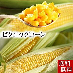 (送料無料)ピクニックコーン 小型のとうもろこし 11〜13本入り 北海道名寄産スイートコーン、糖度18度の生で食べられる極甘トウモロコシ。生とうきび/生なんば、朝もぎ・朝採りの野菜、産