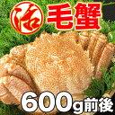 毛ガニ 活毛ガニ 1尾 (600g前後) 北海道産 冷蔵 ボイル対応 かに 毛蟹 活かに 活蟹 刺身も お歳暮 御歳暮 海鮮 ギフト