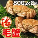 活毛蟹 活毛ガニ 2尾セット (800g前後×2) 北海道産 冷蔵 かに 毛蟹 活かに 活蟹 刺身も ギフト 贈答 内祝い