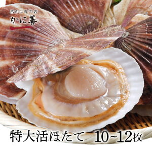 ギフト ほたて 生 帆立 北海道産 大粒 活ホタテ (10〜12枚) 殻付き 冷蔵 生帆立 甘さたっぷりの貝柱 刺身 ギフト