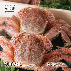 ギフトカニ 活毛カニ訳あり 2〜3尾 (1.8〜2.0kg前後) 北海道産 冷蔵 ボイル対応 かに 毛蟹 活かに 活蟹 刺身も