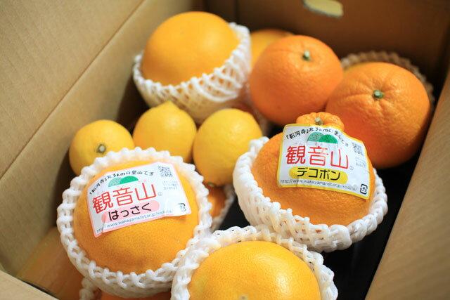 フルーツ定期便5kg箱相当セット北海道・沖縄地域