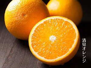 観音山清見オレンジ訳ありB級品 1kg