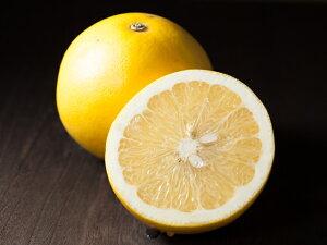 観音山グレープフルーツB級品 サンタマリア 1kg