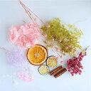 訳ありドライフルーツと花材のおすそ分けセット ハーバリウム キット ポイント 花材 お試し 素材 買い足し 人気 …
