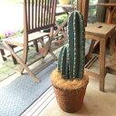柱サボテン7号鉢サイズ
