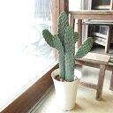 【送料無料】サボテン 墨烏帽子 スミエボシ 2本立ち 6号鉢サイズ 鉢植え【薫る花】【観葉植物 ミニ インテリアグリー…