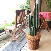 柱サボテン8号鉢サイズ鉢植え