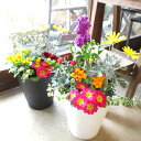 季節のおまかせ寄せ植え(鉢色選べる♪テラコッタ風ローズ柄樹脂鉢植え)