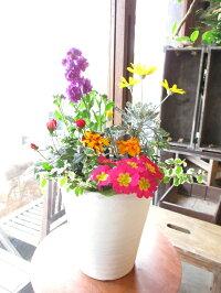 季節のおまかせ寄せ植えセラアート鉢植え7号鉢サイズ鉢色選べるホワイトブラック