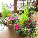 季節のおまかせ寄せ植え(鉢色選べる♪テラコッタ風オーバル形樹脂鉢植え)