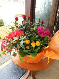 季節のおまかせ寄せ鉢(Mサイズ)