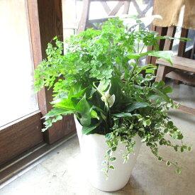 観葉植物のおまかせ寄せ植え 7号鉢サイズ 白色 セラアート鉢 鉢植え 送料無料 薫る花 観葉植物 おしゃれ インテリアグリーン ミニ観葉 セット 福袋 小型 ミニ