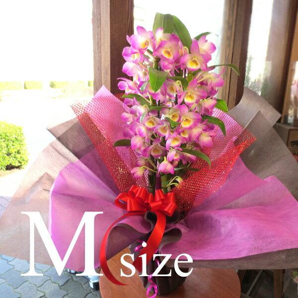 デンドロビューム Mサイズ 鉢植え 高品質でもお求めやすい価格で 洋蘭 洋ラン 送料無料 薫る花 デンドロビウム フラワー 鉢花 花鉢 お歳暮 御歳暮