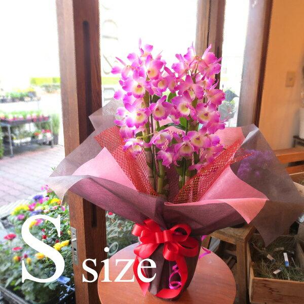 デンドロビューム Sサイズ 鉢植え 小さくてお手頃な 洋蘭 洋ラン 送料無料 薫る花 デンドロビウム フラワー 鉢花 花鉢 お歳暮 御歳暮