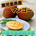 【果物】【フルーツ】【マンゴー】鹿児島県産 マンゴー(化粧箱入り)【楽ギフ_のし】【楽ギフ_のし宛書】