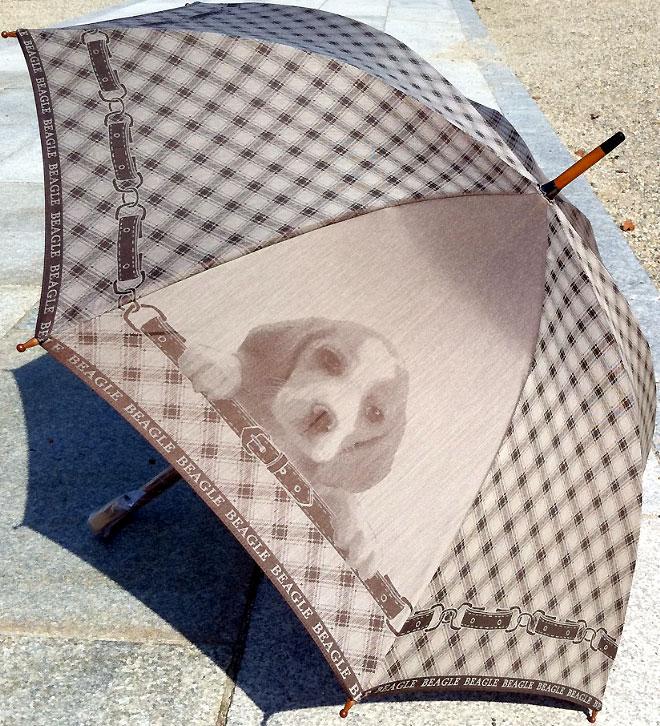 【お名前入れなし】槙田商店 犬の傘 cucciolo(クチロ)BEAGLE(ビーグル)【楽ギフ_包装選択】【楽ギフ_のし】【楽ギフ_のし宛書】