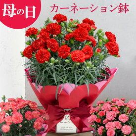 母の日 ギフト お花ギフト プレゼント カーネーション 鉢 生花 鉢植え 送料無料 50代 60代 義母 継母