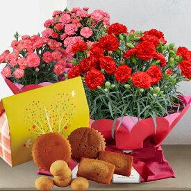 母の日 ギフト お花とスイーツギフト プレゼント カーネーション 鉢 生花 鉢植え 送料無料 スイーツ 50代 60代 義母 継母
