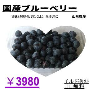 【生食】甘酸バランス良く、生食用に。国産ブルーベリー、ノーザンハイブッシュ系ブルーベリー 冷凍可能 500g【チルド送料無料】 果物 くだもの 国産果物 国産フルーツ お取り寄せ 美味