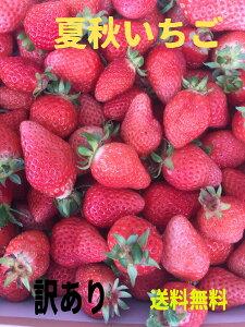 訳あり夏イチゴ 大きさは大 小有 形くずれあり 冷凍可能 スムージーやジュースに 料理にも 赤くてかわいいイチゴちゃん  600g~800g 送料無料 冷蔵夏いちご 訳あり 果物 くだもの いちご 苺 旬
