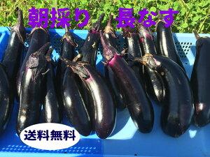 長なす 品種筑陽 果色は濃黒紫色 12~15本 1575円 送料無料ナス 茄子 長ナス 長茄子 なすび 夏野菜 旬野菜 ご当地野菜 新鮮野菜 新鮮 旬 夏 ご当地 お取り寄せ おいしい 美味しい